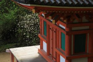 岩船寺 三重塔とミツマタ